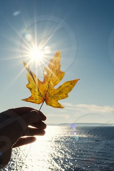 Portrait hand holding fallen Autumn leaf with golden sunburst lens flare. photo