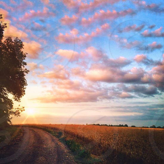 Sunset golden warm landscape driveway lane road wheat field nature countryside clouds pathway path twilight dusk photo