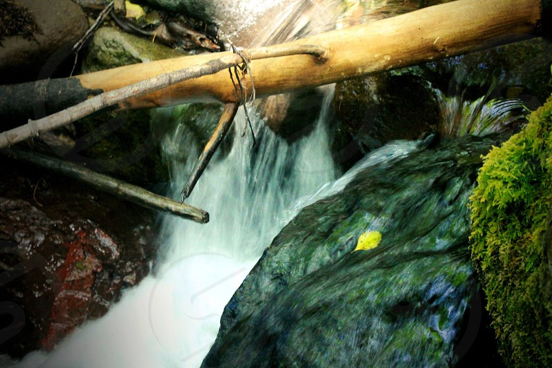 closeup photography of brown bamboo on waterfall photo