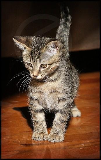 kitten playful photo