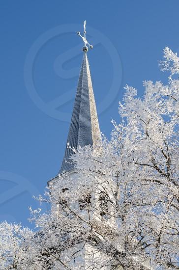 white leaf tree under building photo