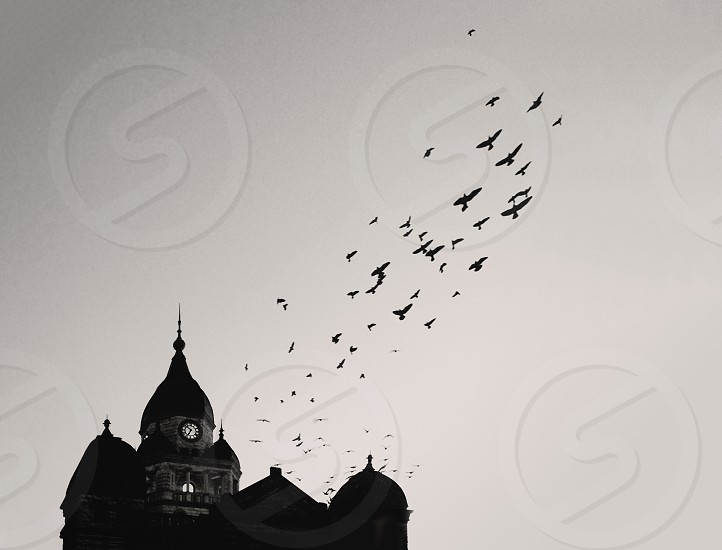 Birds flying over the courthouse in Denton TX.  photo