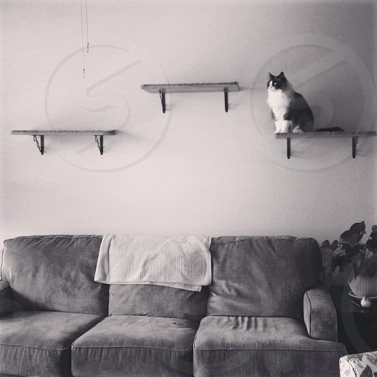 Cat pondering life while perched on a shelf photo