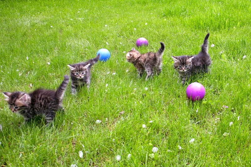 Little fluffy kittens on a green lawn photo