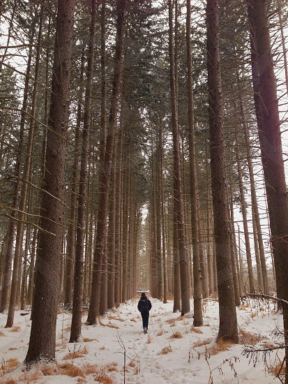 man walking in forest photo