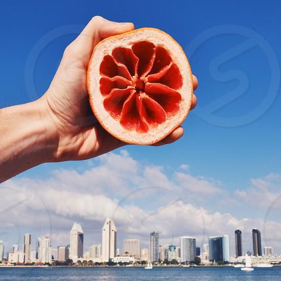 San Diego grapefruit sun photo