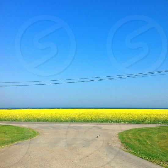 1 road splitting into two photo