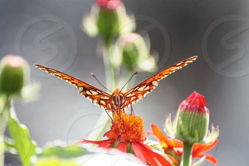 selective focus photo of brown and white butterfly perched on orange cluster flower photo