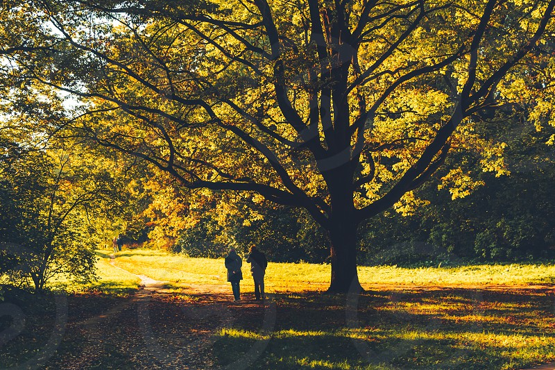 People walking under a huge tree in a park on a sunny fall day photo