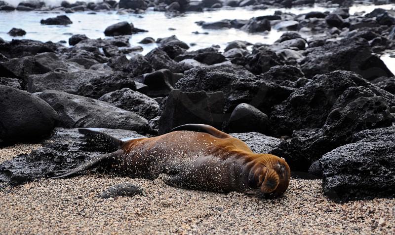 Galapagos Islands Ecuador photo