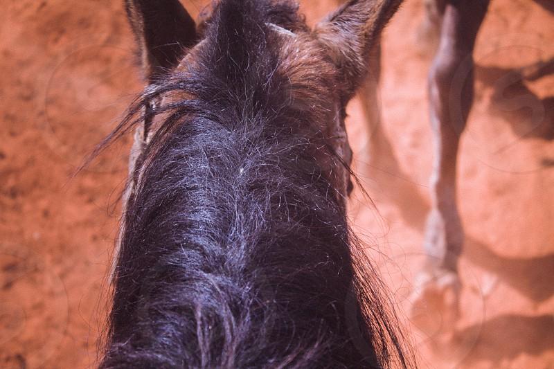 Photo From A Horseback Riding Trip In Viñales Cuba photo