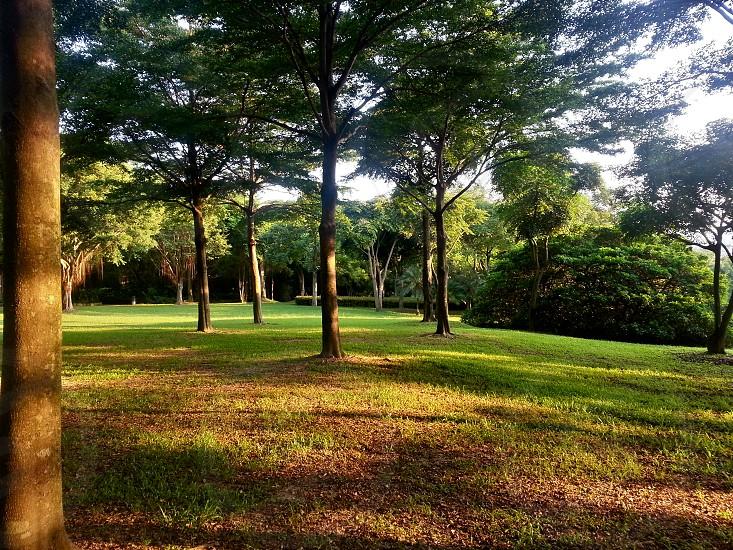 the rising sun glinting on the trees Shenzhen Bijiashan Garden photo