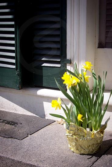 Welcome spring; Salem Massachusetts photo