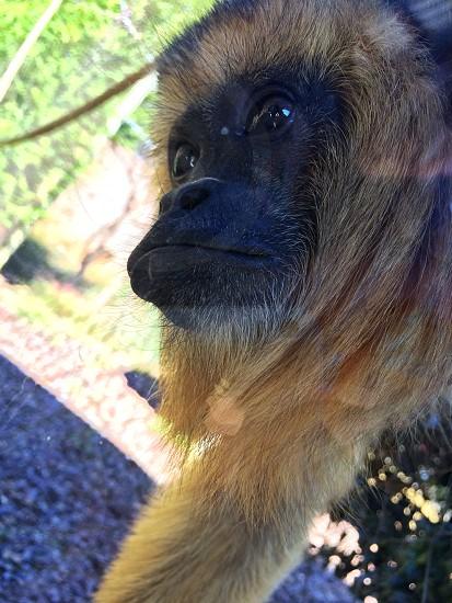 Beautiful monkey at the zoo. photo