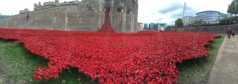 Tower of London poppies photo
