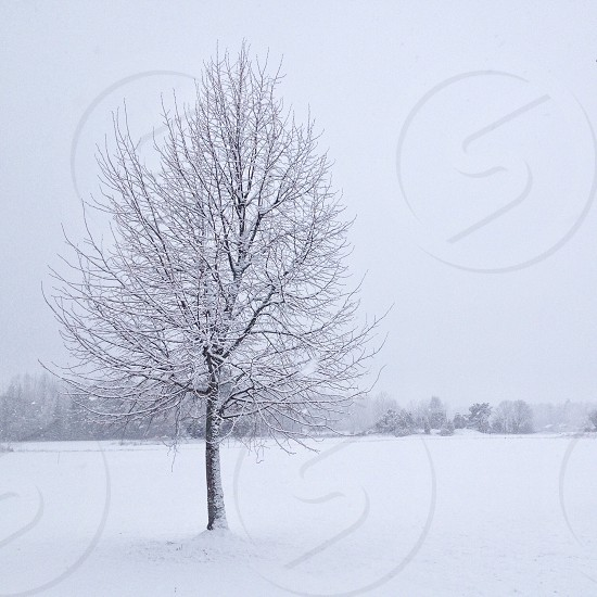 leafless tree on the snow photo photo