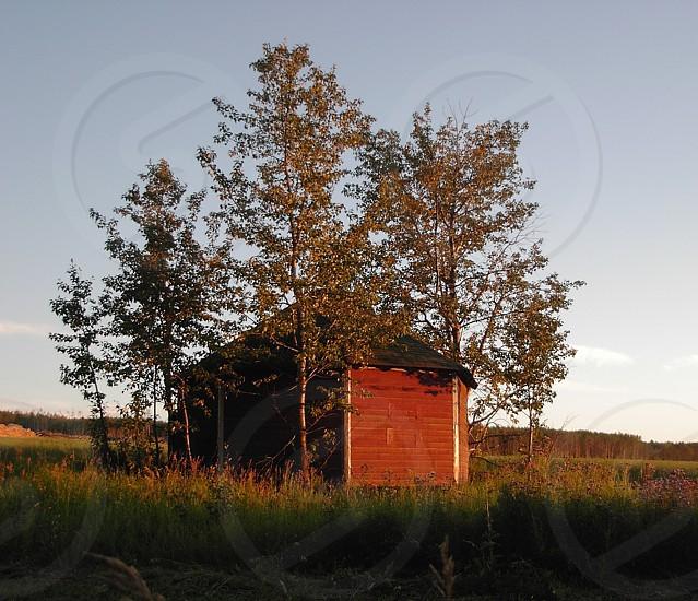 homestead history heritage farmyard photo