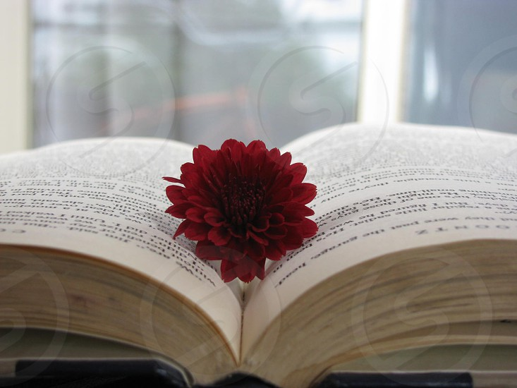 Book flower red photo