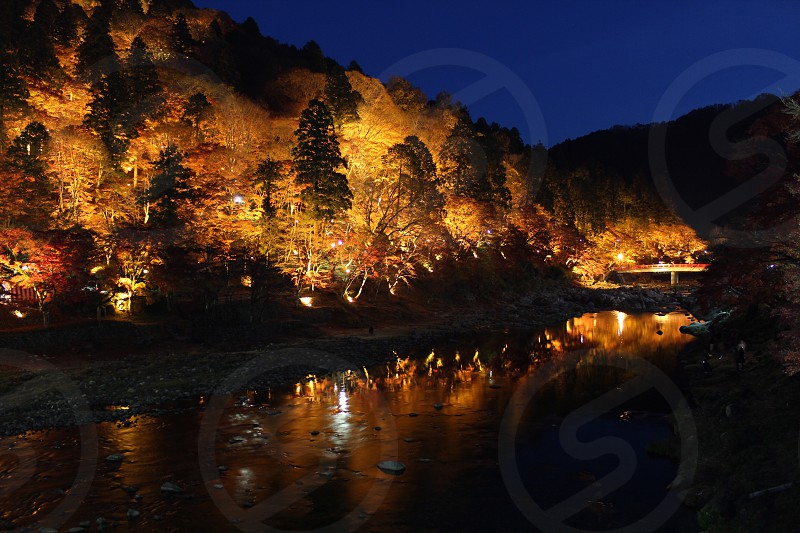 body of water near lighted trees photo
