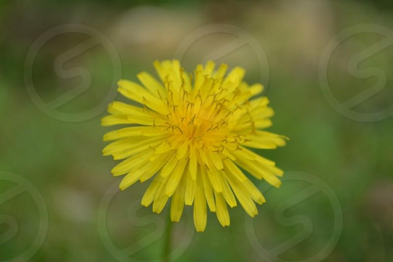 Yellow .1 photo