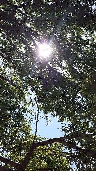 sunrise  summer. nature tree sky sun photo