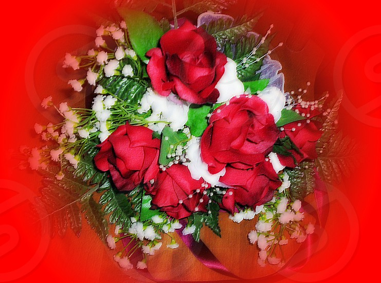 bouquet of red and white roses photo