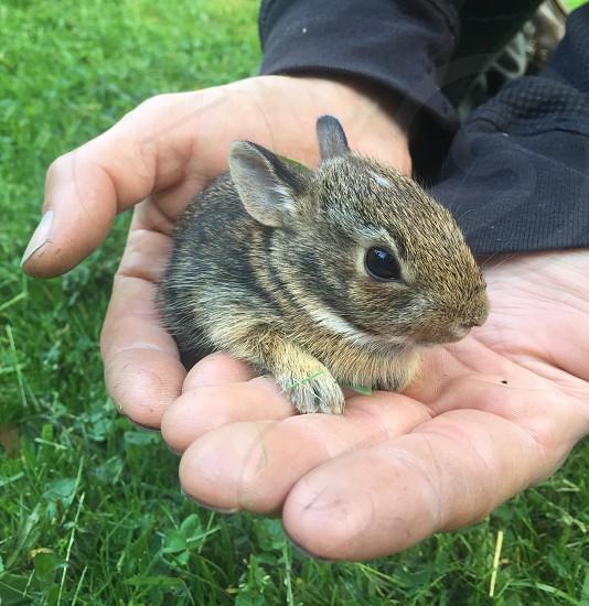 Baby bunny baby animals bunny rabbit nature hands photo