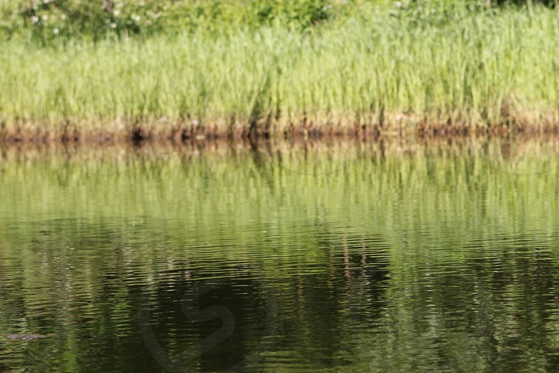 Sea grass on land with beautiful reflections photo