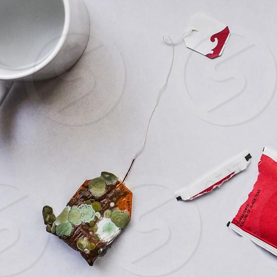 Tea kombucha mold photo