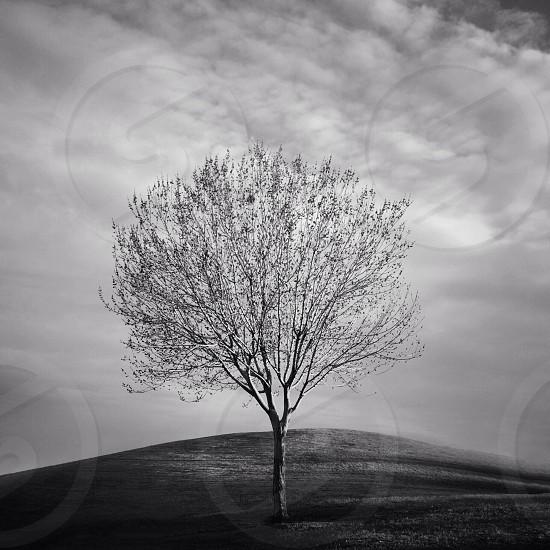tree silhouette photo