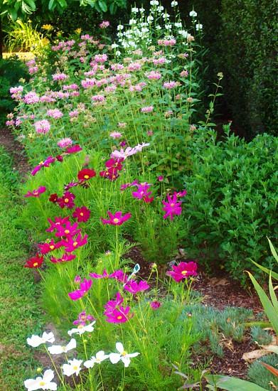 Wild flowers Cumberland Rhode Island photo