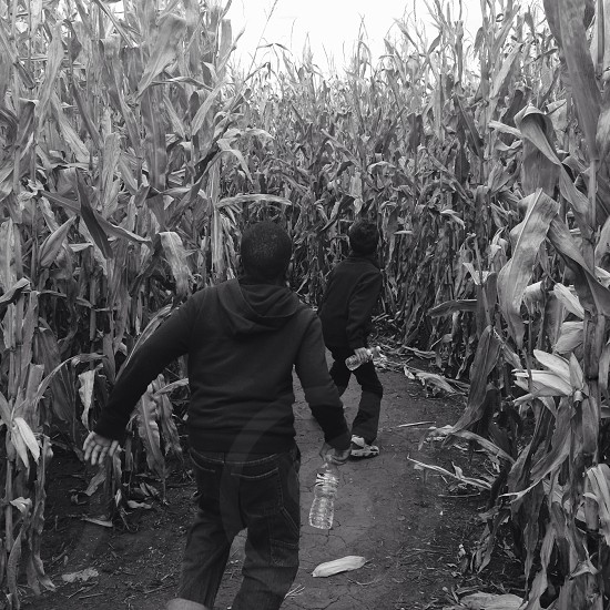 Kids playing in corn maze  photo