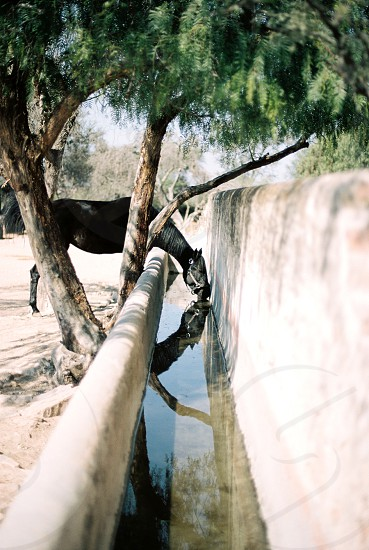 San Miguel Mexico horse hacienda photo