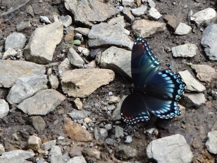 Butterfly Rocks photo
