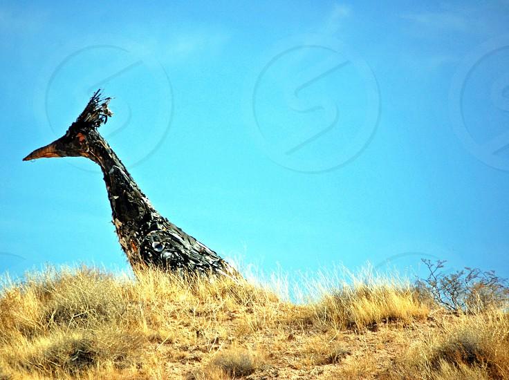 Bird on a hill statue photo