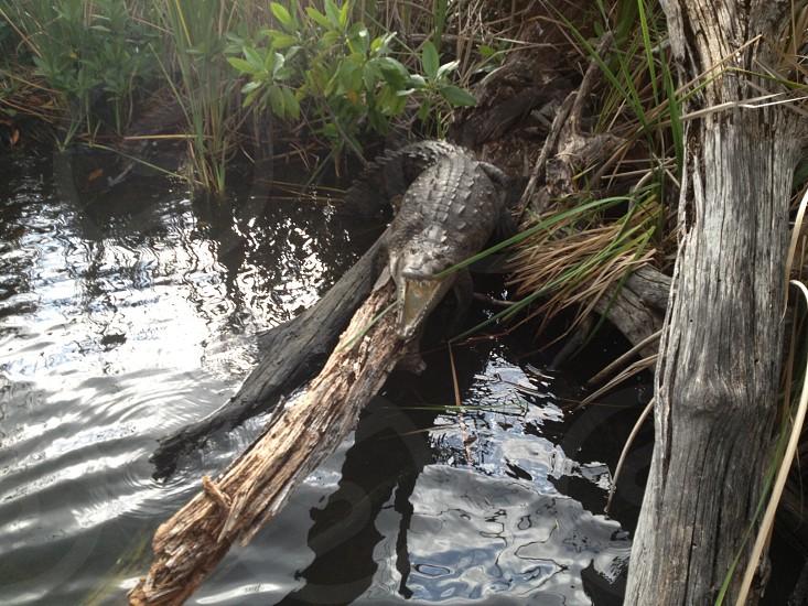 Croc photo