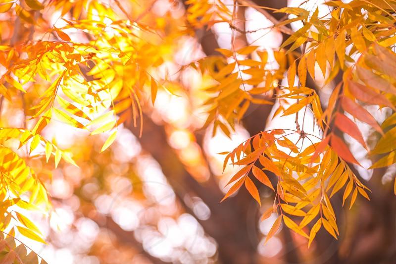 leavesautumngardenfoliageorangebranchwoodtreenatureyardleaffall photo