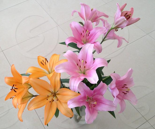 Pink and pale orange irises set againsta background of white tile photo