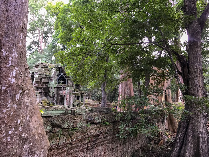 Outdoor day landscape horizontal colour Ta Prohm Temple Angkor Cambodia Asia Asian East Eastern Holy religious spiritual Tree nature takeover Tombraider Lara Croft movie set Hollywood travel travelling traveller wanderlust tourism tourist stone carved ornate ruin ancient roots rocks hidden photo
