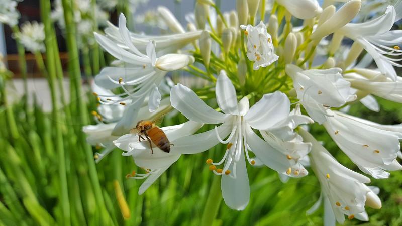 flower bee photo