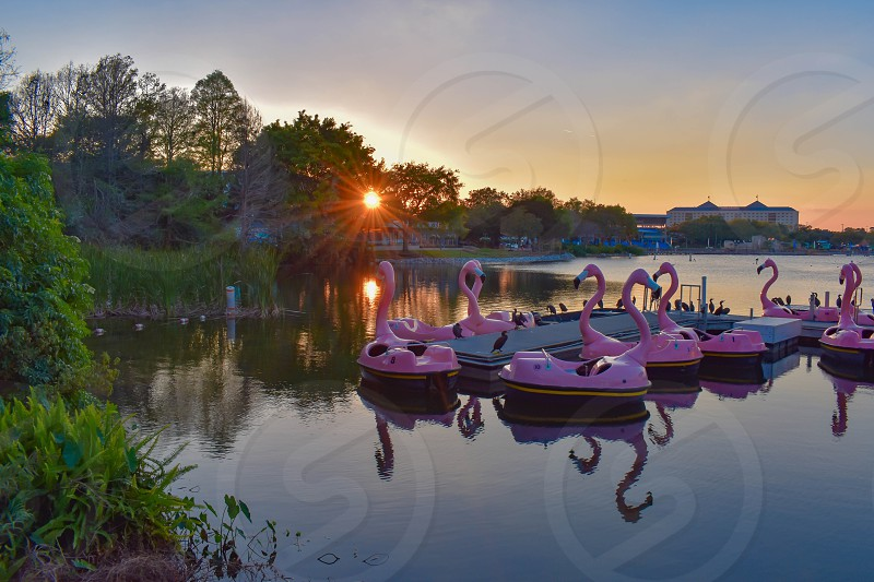 Orlando Florida. March 09 2019. Flamingo's Paddle boat on colorful sunset background  at Seaworld in International Drive area (1) photo