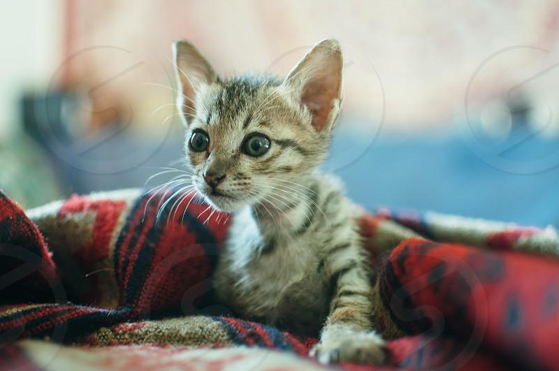 Cute Small Kitten photo