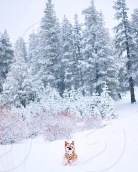 Lake Tahoe snow winter winter wonderland animals photo