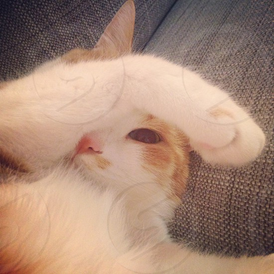 cat covering face lying on couch photography photo