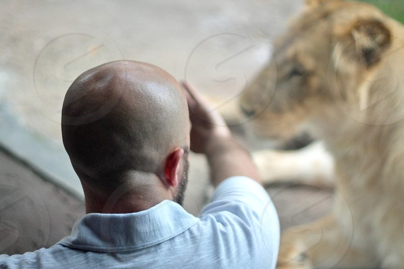 Man at zoo looking at lion. photo