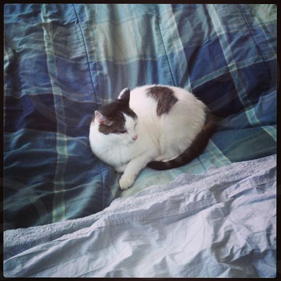 Cat on blanket photo
