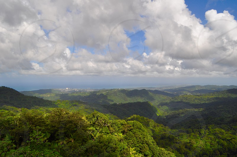 Puerto Rican Rain Forest  photo
