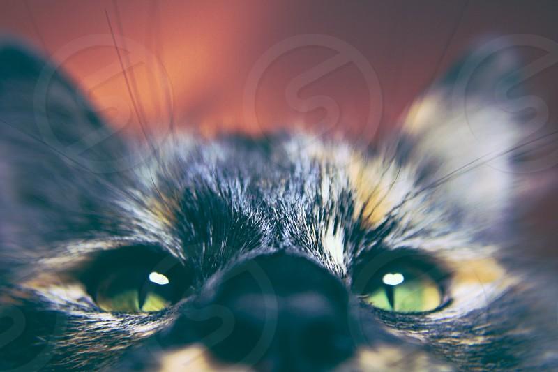 Curious Kitty photo