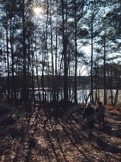 Fort Yargo trees photo