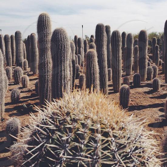 Cactus Farm Anthem Az photo